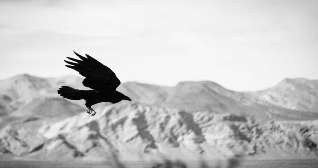 best wildlife photos taken in death valley national park california