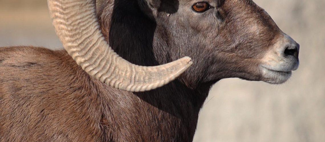 Best National Parks for Spotting Wildlife