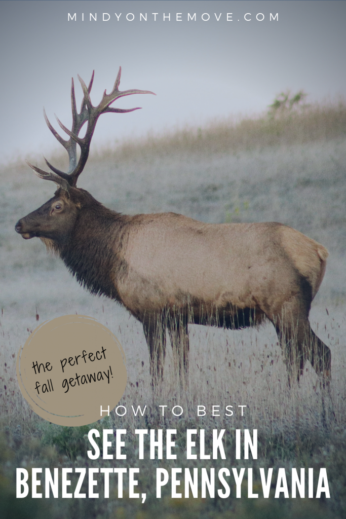 elk viewing guide for benezette